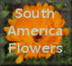 Flowers in South America and on a cruise