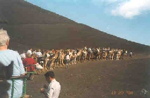 Everyone else on their camels, in front of us.